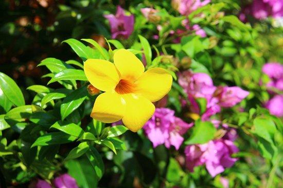 Victoria, Seychellen: Flower on Praslin island