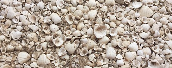 Dakar Region, Senegal: sea shell ground