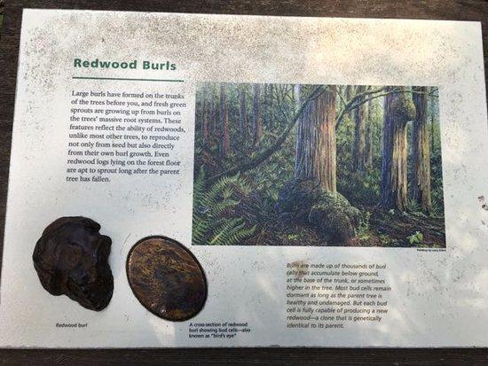 Милл-Валлей, Калифорния: Explanations along the trail