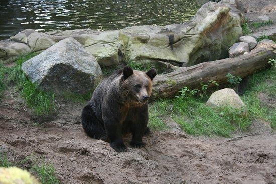 Rosengarten, เยอรมนี: Ein Bär wartet auf sein Bild