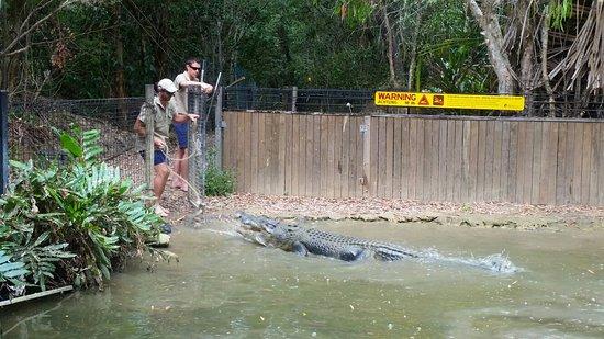 Palm Cove, Australia: 20160814_150334_large.jpg