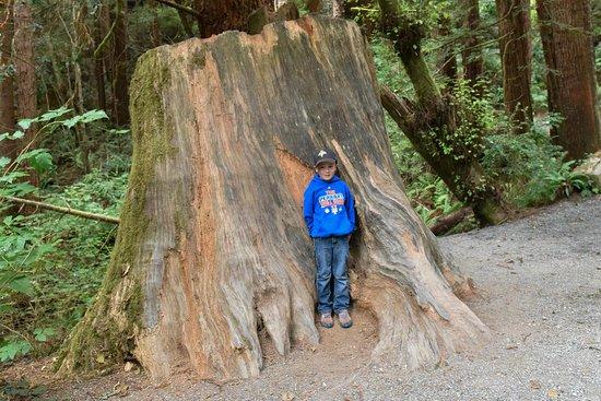 Klamath, CA: Many beautiful, interesting trees along the trail