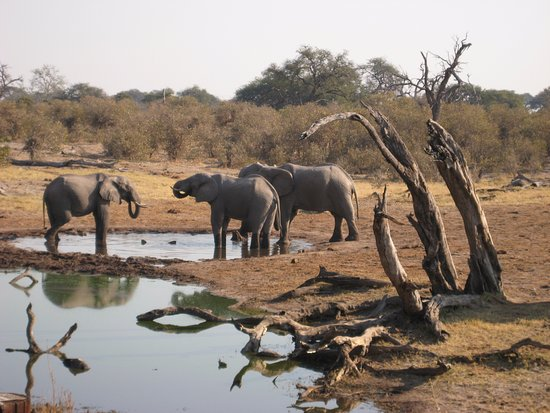 Kasane, Botswana: elephant of chobe