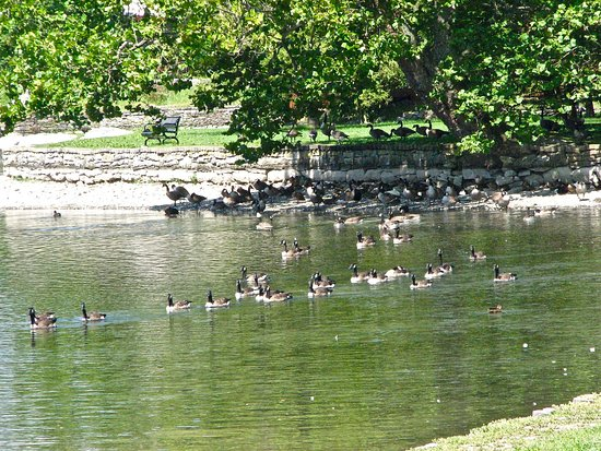 Boiling Springs, PA: Ducks