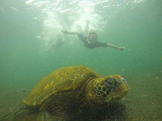Puerto Villamil, Ekvador: Turtle