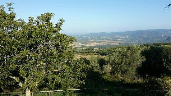 Seggiano, Włochy: Antica Tenuta Le Casacce
