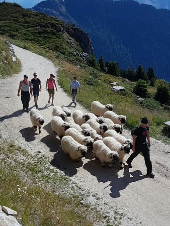 Belalp, Швейцария: Hotel Pension TIGILOU