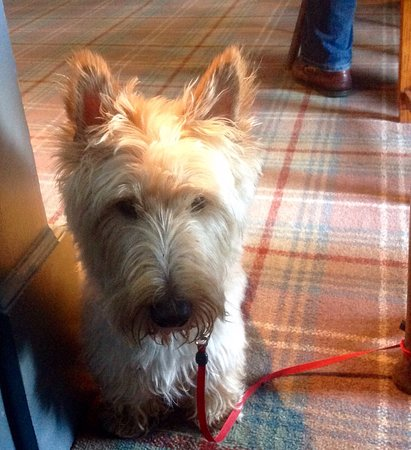 Tighnabruaich, UK: Dog friendly