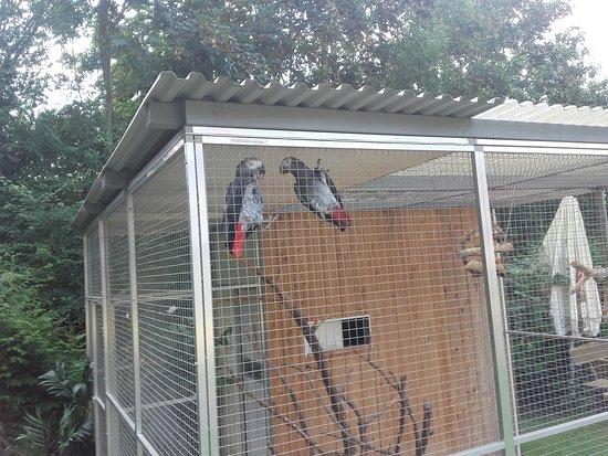 Schwäbisch Hall, Alemania: la voliera in giardino