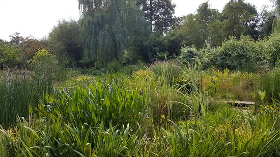 Westonbury Mill Water Gardens: 20160829_144053_large.jpg