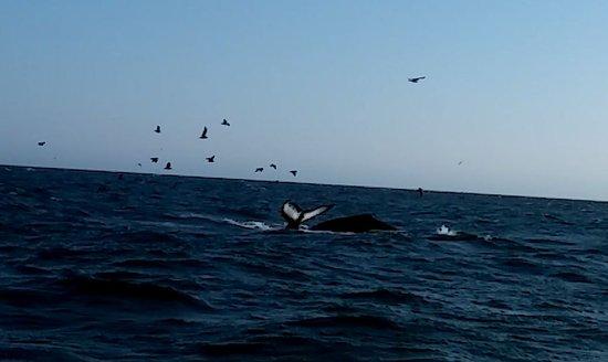 Avila Beach, Califórnia: diving whales