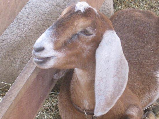 Michigan's Adventure: Petting Zoo