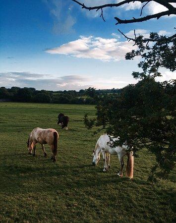 Boskill equestrian/Trekking Homestay