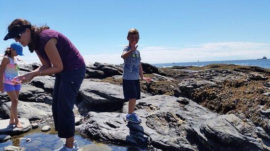 Jamestown, RI: kids are loving it