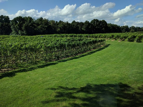 Buchanan, MI: View across the vineyards from the restaurant at Tabor Hill Winery