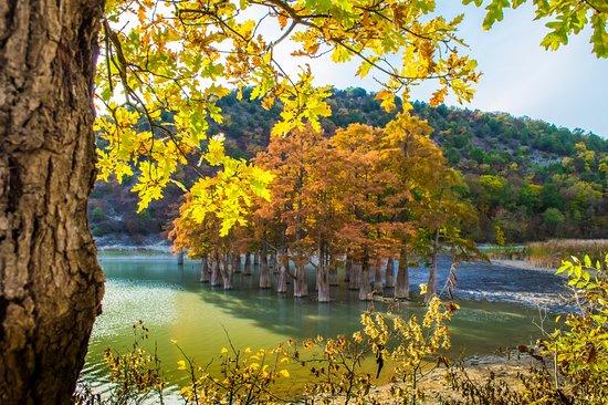 Sukko, Russland: Озеро Сукко и болотные кипарисы в октябре