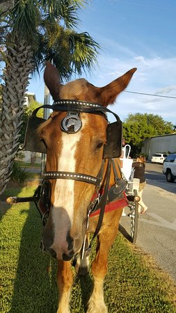 Fernandina Beach, FL: 20160827_191209_large.jpg