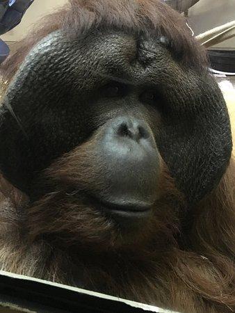 Cheyenne Mountain Zoo: Must See!!