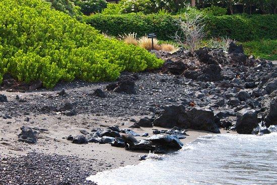 Foto de Waikoloa