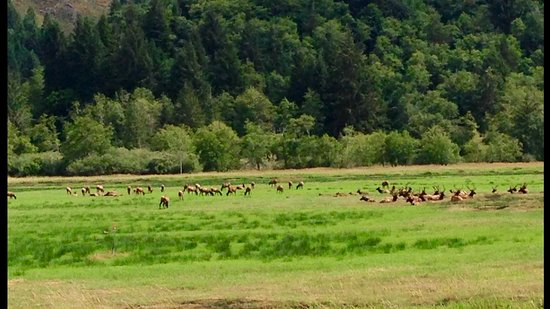 Reedsport, OR: Very close to the Deans Elk Creek viewing area!