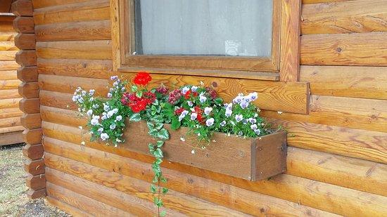 Snake River Park KOA and Cabin Village: Lovely windowboxes