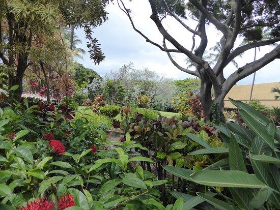 Wailuku, Hawaje: Tropical plantation