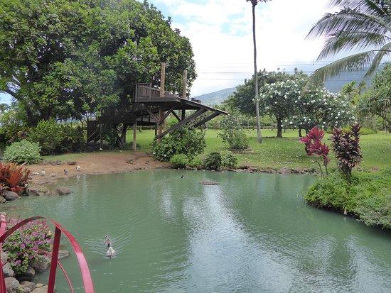 Wailuku, Hawaje: Tripical plantation