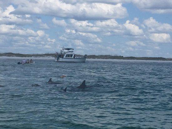 Best Dolphin Tour Panama City Beach Fl