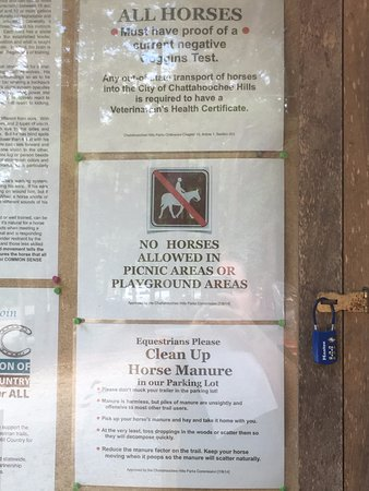 Palmetto, Geórgia: Horses!!!