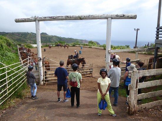 Wailuku, Hawaje: Waiting to be matched to a horse