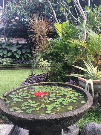 Mandia Bungalows: Vue du jardin