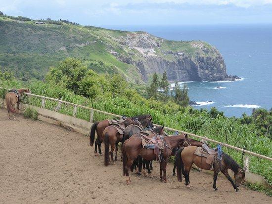 Wailuku, Χαβάη: Horse corral