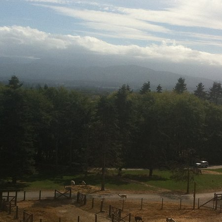 Olympic Game Farm: Vistas below