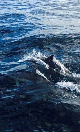 Nelson Bay, Australien: photo5.jpg