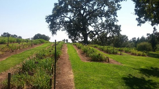 Plymouth, Kalifornien: Amador Flower Farm