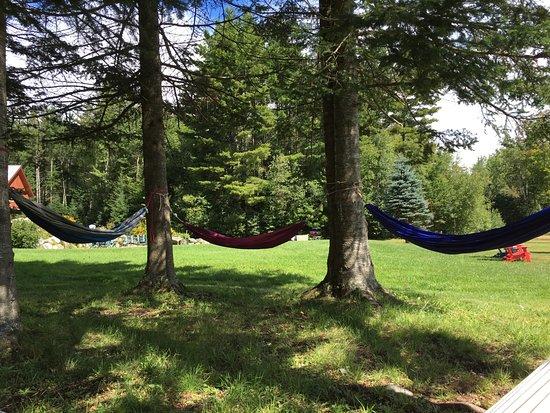 Ripton, VT: The hammocks