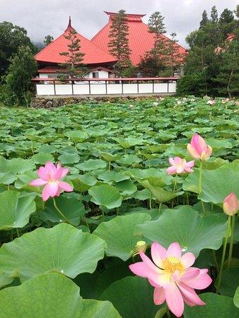 Tosen-ji Temple: 稲泉寺の本堂とハス田
