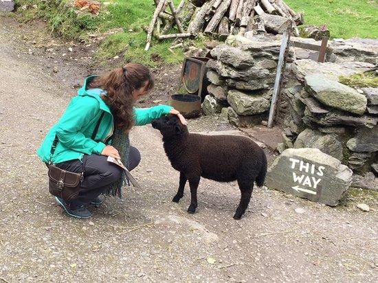 Kenmare, Irland: Chocolate Sheep!