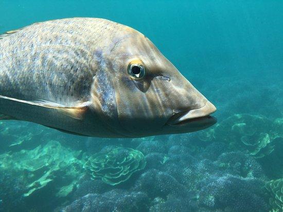 Coral Bay, Australia: photo5.jpg