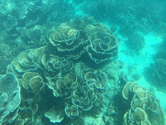 Coral Bay, Australia: photo6.jpg