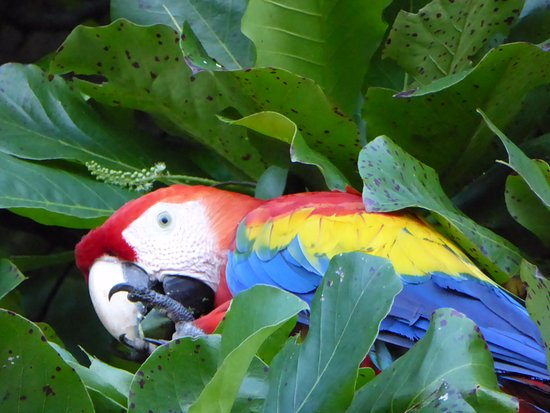 Encanta La Vida: scarlet macaw at the beach