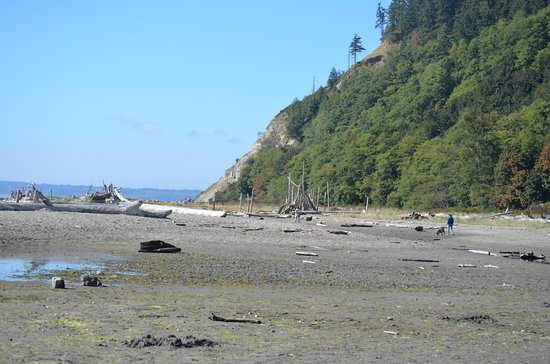 Freeland, WA: Endless driftwood