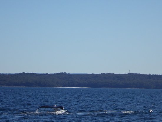 Huskisson, Australia: Tail One