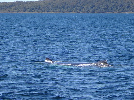 Huskisson, Australia: Mother and calf