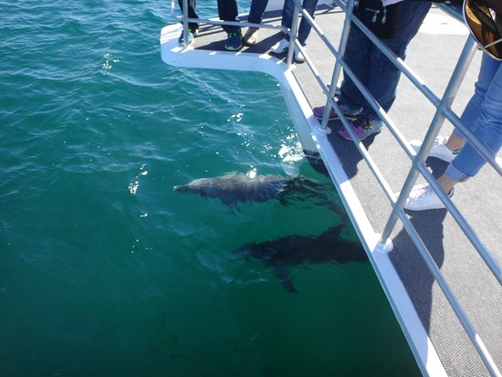 Huskisson, Australia: Pause for dolphins