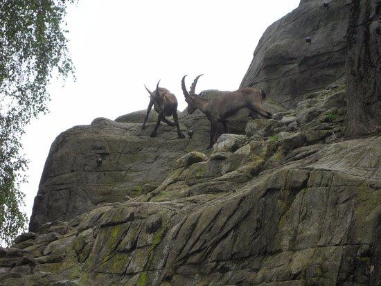 Wildpark Peter & Paul: Springbock2