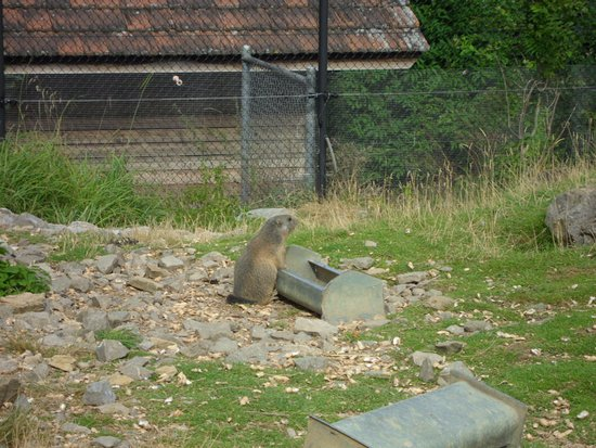 Wildpark Peter & Paul: Murmeltier