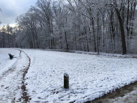 Bürgerpark: Im Winter