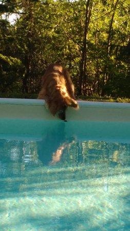 Agriturismo Casa Branca : piscina