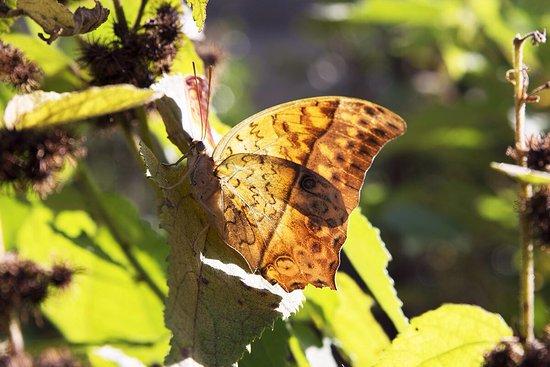 Butterfly Farm: photo0.jpg